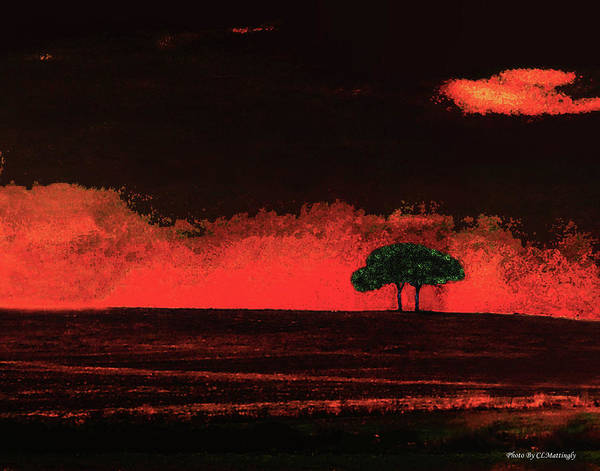 Two Trees In Tuscany Art Print