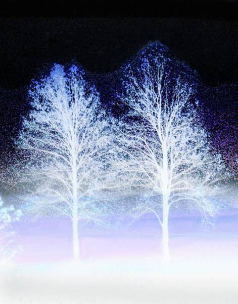 Two Trees In Winter Art Print