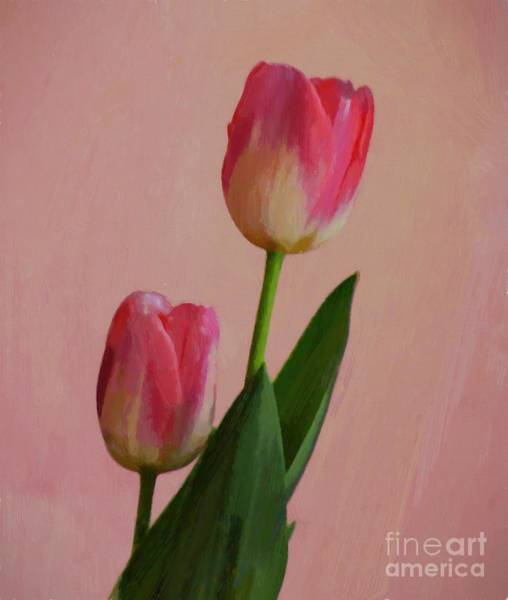 Photograph - Two Tulips For You by John Kolenberg