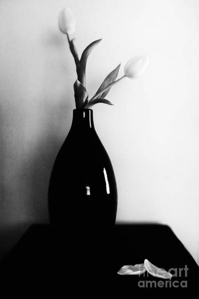 Photograph - Two Tulips by Lisa McStamp