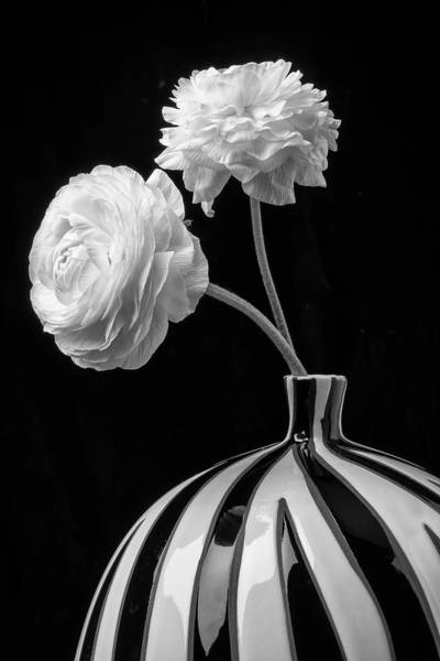 Ranunculus Photograph - Two White Ranunculus In Vase by Garry Gay