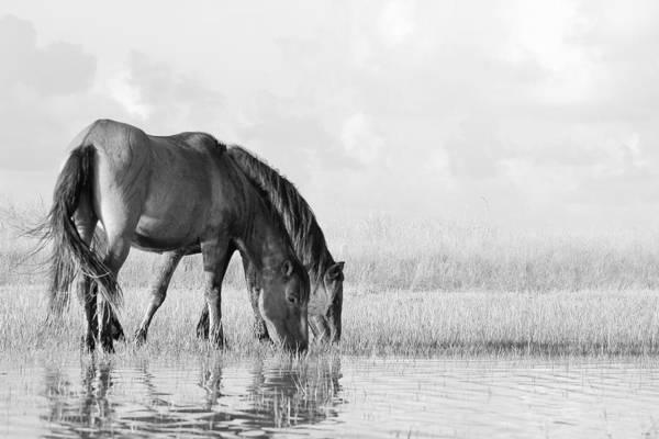 Photograph - Two Wild Mustangs by Bob Decker