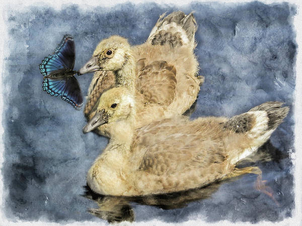 Digital Art - Two Young Canada Geese. by Rusty R Smith