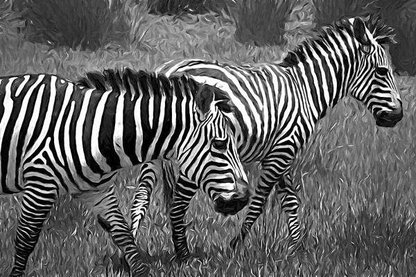 Photograph - Two Zebra by Alice Gipson
