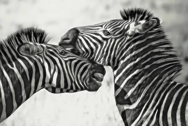 Wall Art - Digital Art - Two Zebra by Daniel Hagerman