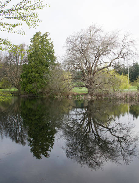 Photograph - Two Trees Reflected by Marilyn Wilson