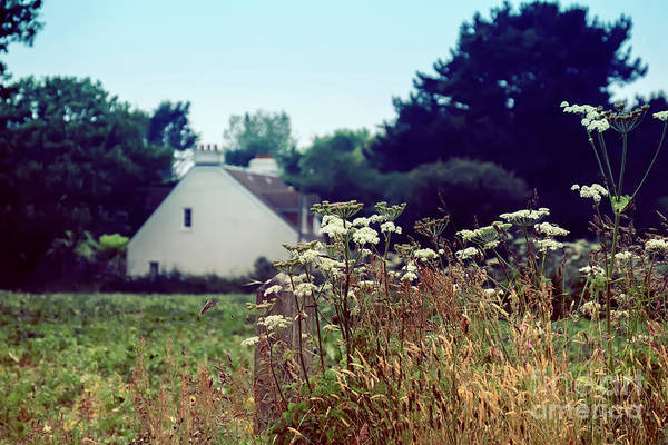 Photograph - typical English country side by Ariadna De Raadt