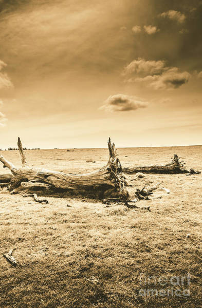 Tree Trunk Photograph - Typical Tasmania by Jorgo Photography - Wall Art Gallery