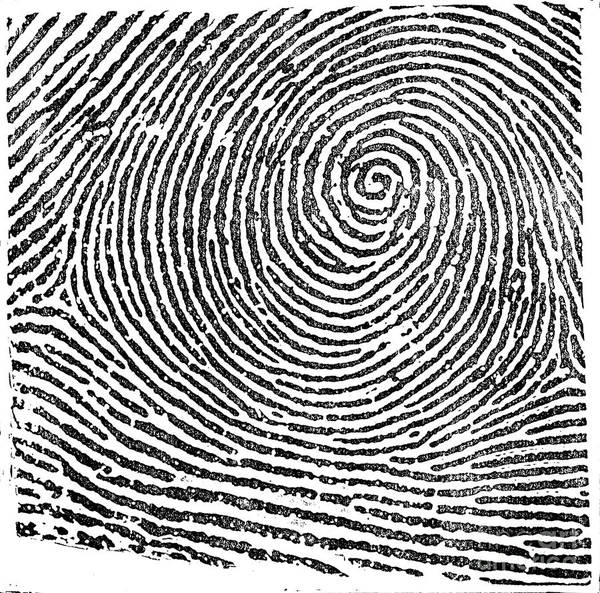 Photograph - Typical Whorl Pattern In 1900 by Science Source