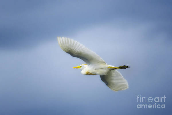 Photograph - Ubiquitous by Patrick M Lynch