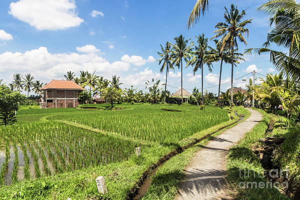 Photograph - Ubud Rice Paddies Walk In Bali by Didier Marti