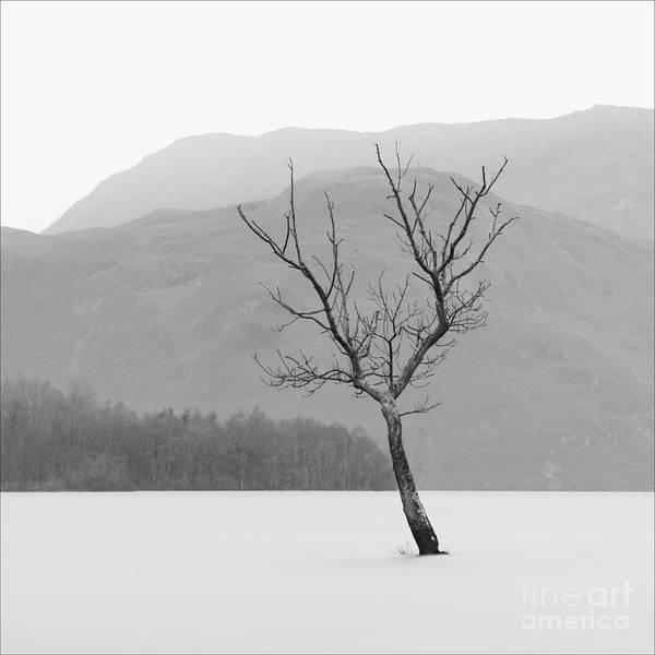 Ullswater Photograph - Ullswater Tree Lake District by Richard Thomas