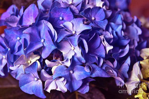 Photograph - Ultra Violet Dance by Silva Wischeropp