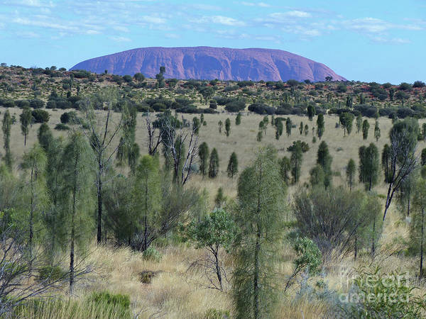 Photograph - Uluru From The Bush by Phil Banks
