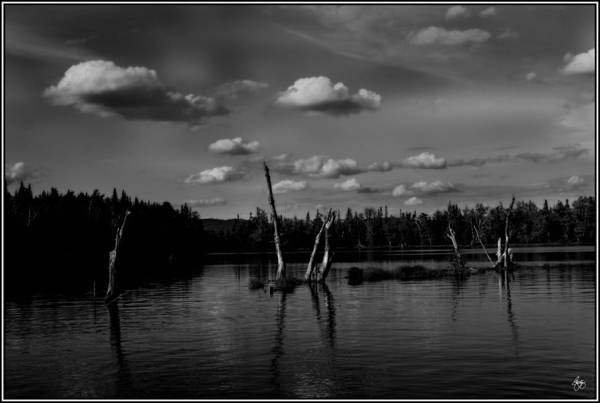 Photograph - Umbagog Monochrome by Wayne King