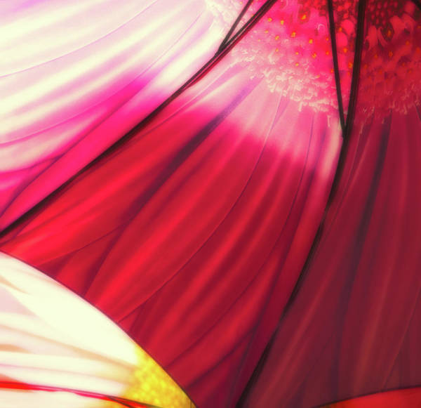 Photograph - Umbrella by Thomas Hall