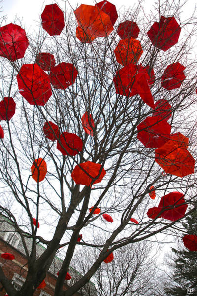 Photograph - Umbrella Tree by John Meader