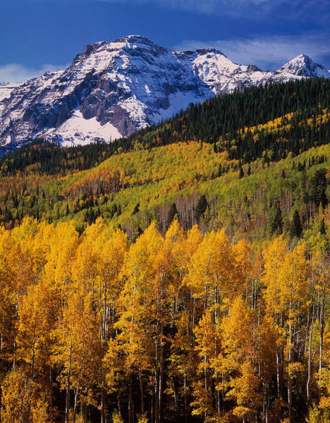 Uncompahgre National Forest Co Usa Art Print