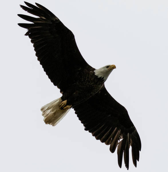 Photograph - Under A Soaring Eagle by Gloria Anderson