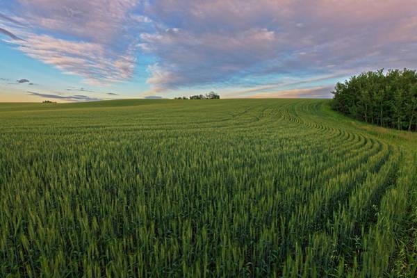 Photograph - Under A Summer Sky by Dan Jurak
