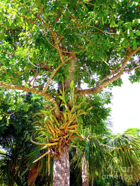 Photograph - Under A Tropical Tree M by Francesca Mackenney