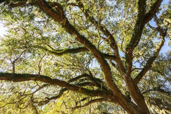 Wall Art - Photograph - Under An Oak Tree - Brazos Bend State Park - Texas by Ellie Teramoto