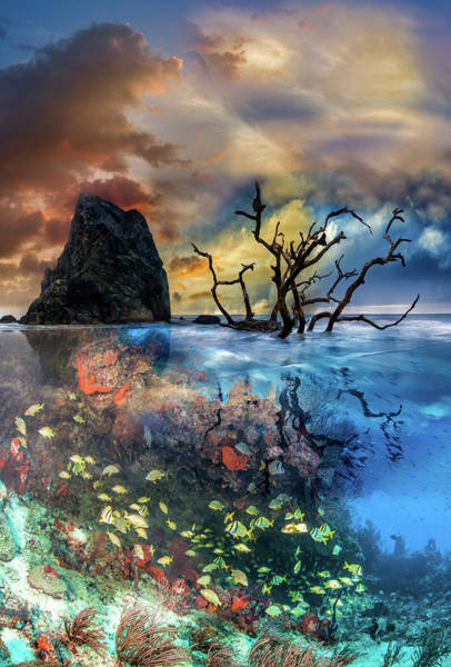 Above And Below Wall Art - Photograph - Under And Over The Reef by Debra and Dave Vanderlaan