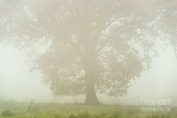 Wall Art - Photograph - Under Misty Oak by Richard Thomas