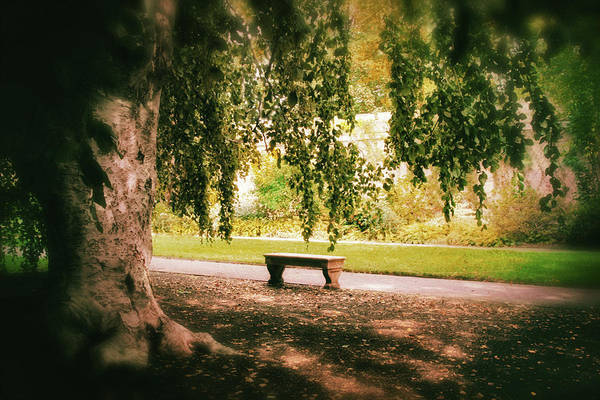 Photograph - Under The Beech Tree by Jessica Jenney