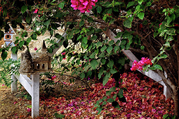 Wall Art - Photograph - Under The Bougainvillea by Camille Lopez