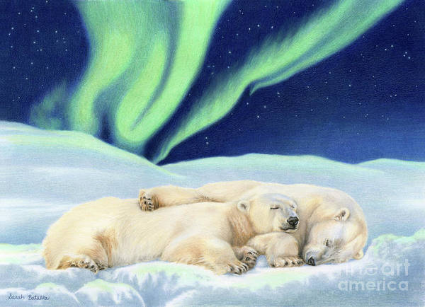 Light Blue Drawing - Under The Northern Lights by Sarah Batalka
