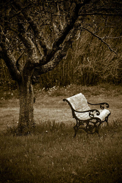 Wall Art - Photograph - Under The Old Apple Tree by Frank Tschakert