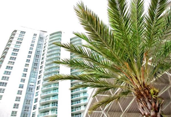 Photograph - Under The Palm by Alice Gipson
