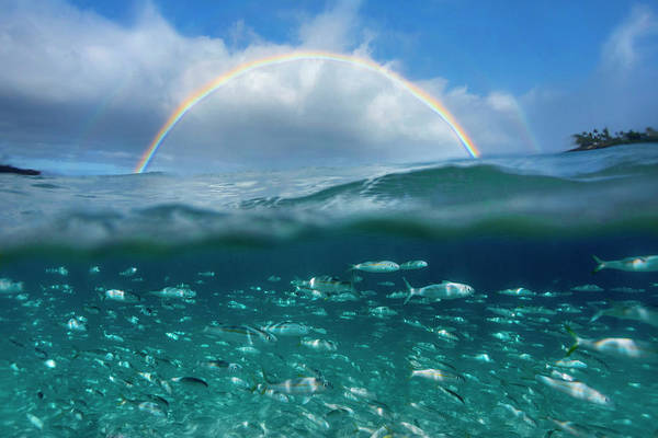 Above And Below Wall Art - Photograph - Under The Rainbow by Sean Davey