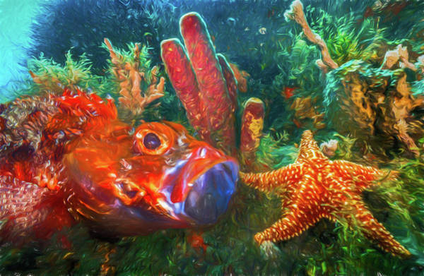 Photograph - Under The Sea At The Reef Oil Painting by Debra and Dave Vanderlaan
