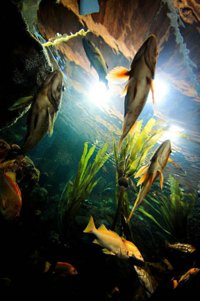 Oregon Wildlife Wall Art - Photograph - Under The Sea by Todd Klassy