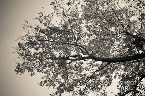 Photograph - Under The Trees by Ana V Ramirez
