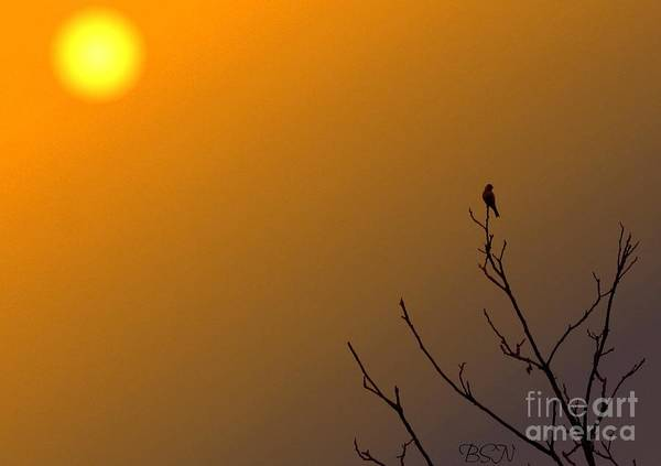 Photograph - Under The Tuscan Sun by Barbara S Nickerson