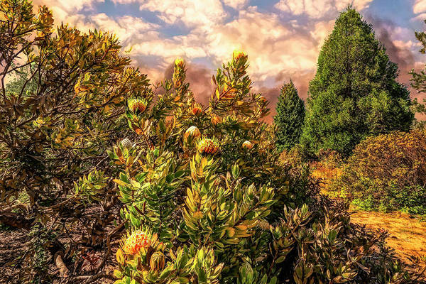 Photograph - Underbrush Dreams by Bill Posner