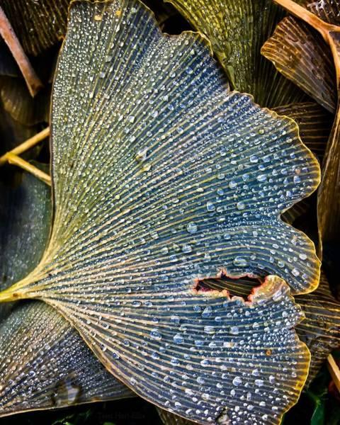 Photograph - Underfoot Fortune by Terri Hart-Ellis