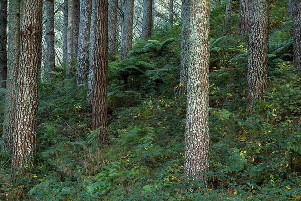 Photograph - Undergrowth by Nicholas Blackwell