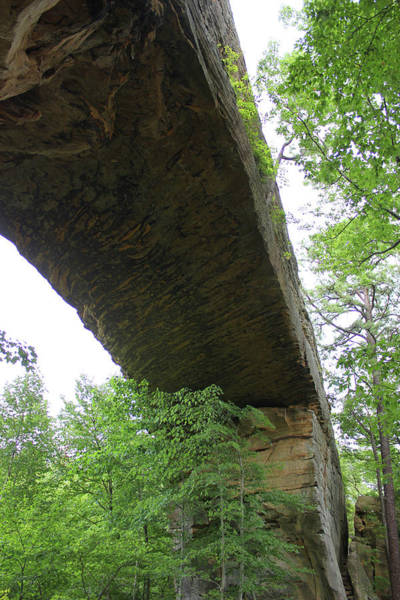 Natural Mixed Media - Underneath Natural Bridge In Slade Kentucky by Design Turnpike