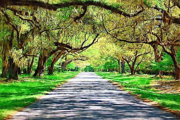 Photograph - Underneath The Live Oaks by Donna Bentley