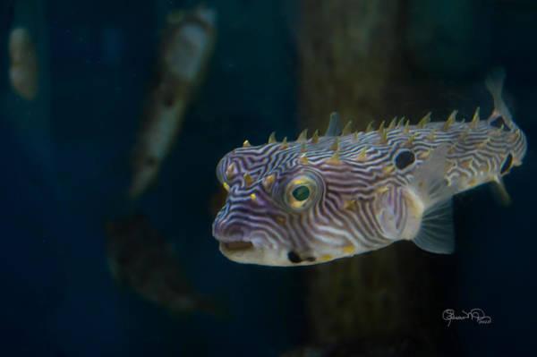 Photograph - Undersea Happy Face by Susan Molnar