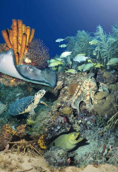 Digital Art - Underwater Collage by Richard Nickson