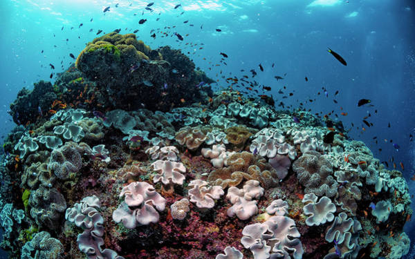 Scuba Diving Photograph - Underwater Community by Shane Linke