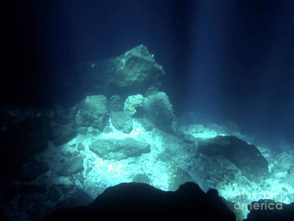 Photograph - Underwater In The Cenote by D Hackett