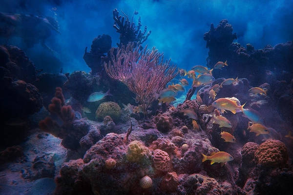 Lively Photograph - Underwater Paradise by Betsy Knapp