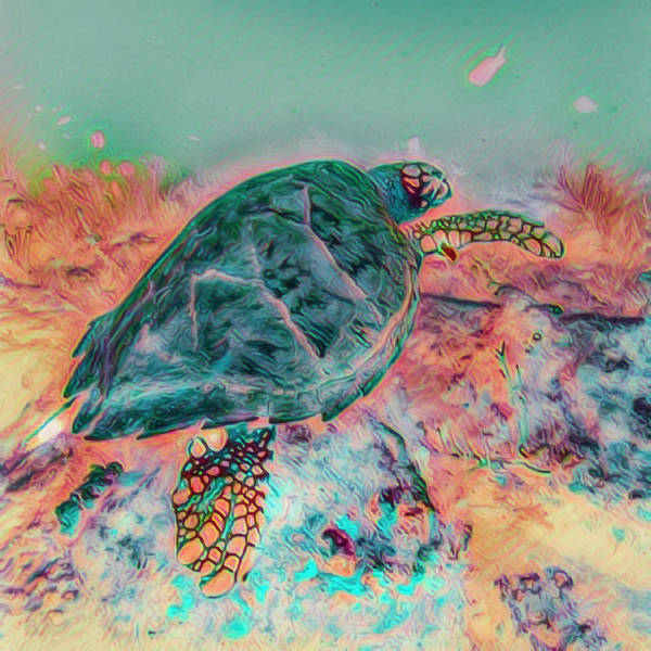 Photograph - Underwater Pastel Colors by Debra and Dave Vanderlaan