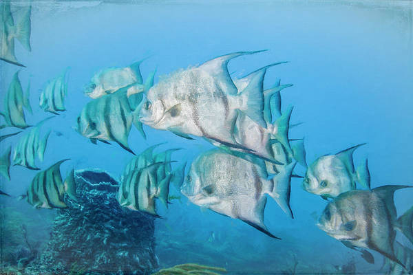 Photograph - Underwater Rainbow Of Dreamy Watercolors by Debra and Dave Vanderlaan